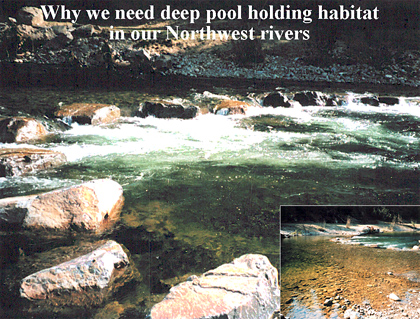Why We Need Deep Pool Holding Habitat In Our NW Rivers