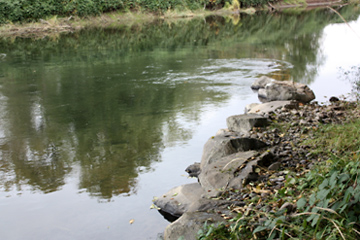 Gray's River Habitat Restoration Project